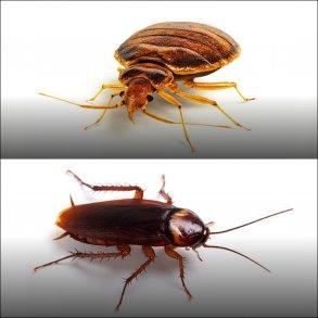 Væggelus og kakerlakker